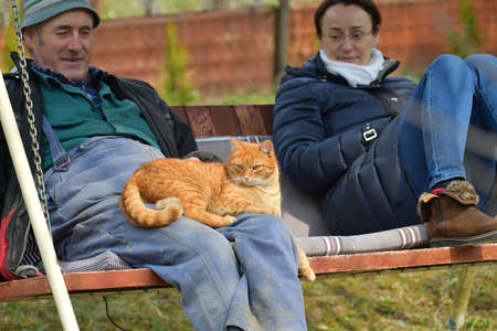 People sit on a swing with cats on their knees