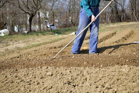 A farmer in a field cultivates the soil by hand before planting the seeds in the spring 版權商用圖片