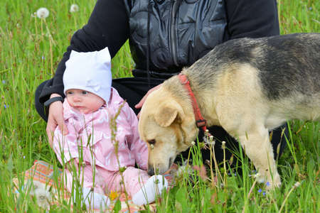 The domestic dog is snuggling to the child sitting on a green meadow in the grass with his mother