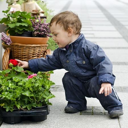 empedrado: Bebé o un niño pequeño flor de mirada infantil en una maceta en un patio o jardín de la calle.
