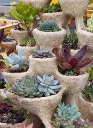 Succulents potted in decorative planter pot.