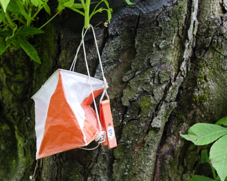 Orienteering control point on a tree.