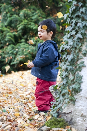 oudoors: Child in autumn or fall forest playing with falling leaves. Stock Photo