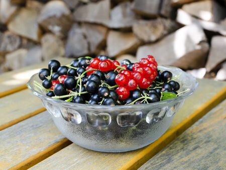 Black and red currant in a glass bowl on a table in a garden. photo