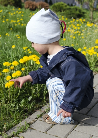 to crouch: Toddler child, boy or girl, pointing at dandelion flower at spring grass in a garden or park   Stock Photo