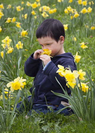 A child boy sitting amonst daffodil flowers in a spring garden or in a park.