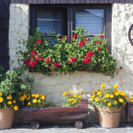 country house style: Old country cottage house with patio garden and window with potted plants and flowers.
