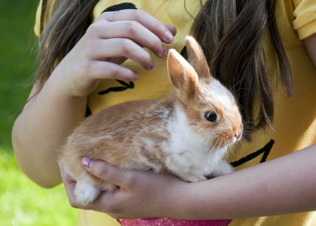 Small pet rabbit in hands of a child girl.