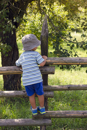 Child boy climbing over wooden fence into a garden or orchard, back view.