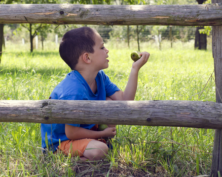Child sitting in grass behind wooden fence in orchard or garden eating organic pear. photo
