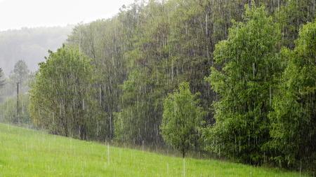 Zware regen van de lente douche in een groene veld en bos. Stockfoto