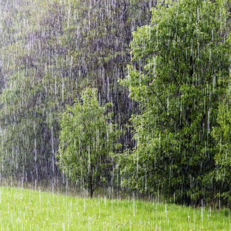 heavy rain: Heavy rain of spring shower in a green field and forest.
