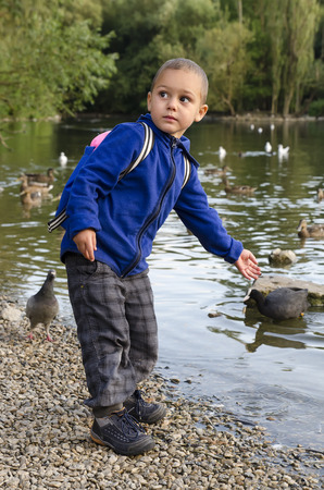 children pond: Child boy feeding ducks on pond or river in nature.