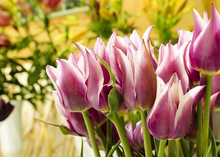 red tulip: Pink tulips at vase in at market or in a florist shop.