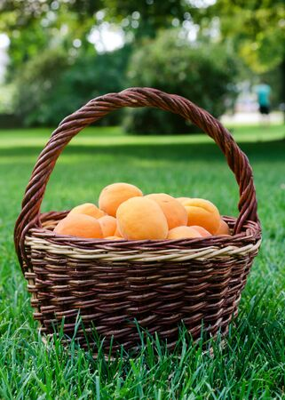 Apricots fruits in wicker basket on a green grass