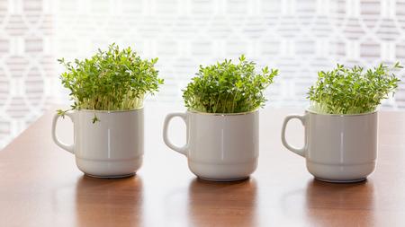 berros: berros o berro fresco que crece en pequeñas tazas en casa.