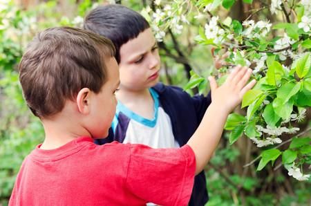 Children exploring spring blossoms