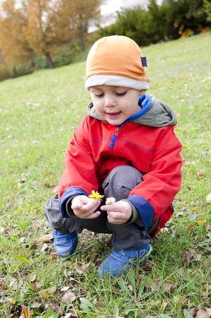 Child boy looking daisy flowers in the grass Stock Photo