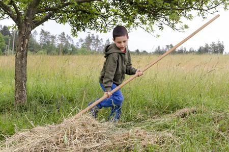 child boy working in a garden, raking hay or cut grass with a big rake.