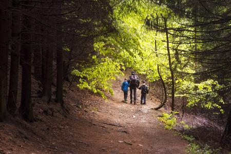 Familie, vader met twee kinderen wandelen door een bos, achteraanzicht