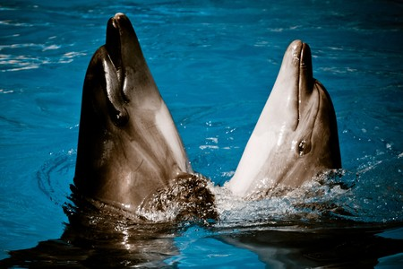 cetaceans: Dolphins dancing together Stock Photo