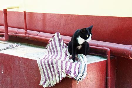 playful: Playful Cat Stock Photo