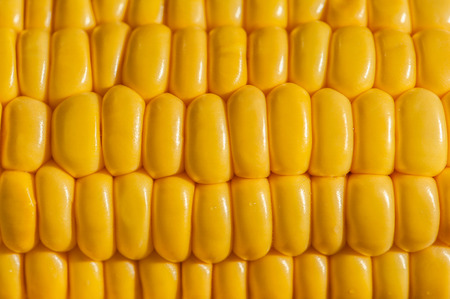 Extreme close up of yellow corn cobs texture, horizontal Stock Photo