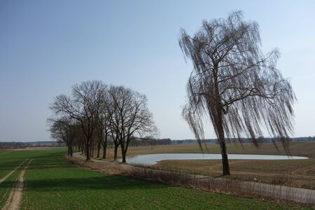 Landscape with a tree-lined road south of Olsztyn, Poland Stock Photo
