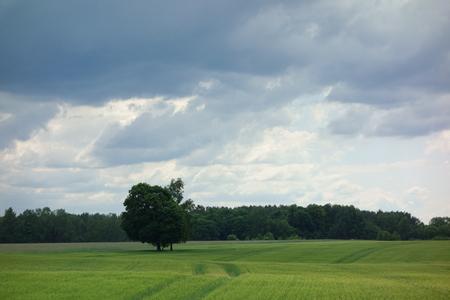 Field landscape with trees and a stormy sky Zdjęcie Seryjne