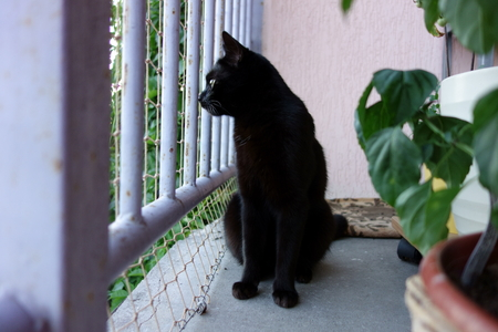 Black cat in the balcony enclosure, watchful profile