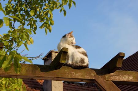 Tabby white cat on the garden pergola