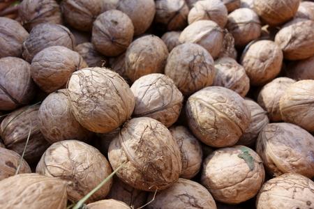 Crop of fresh walnut fruits