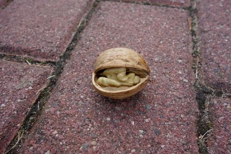 Cracked walnut closeup, the off-white kernel visible Zdjęcie Seryjne