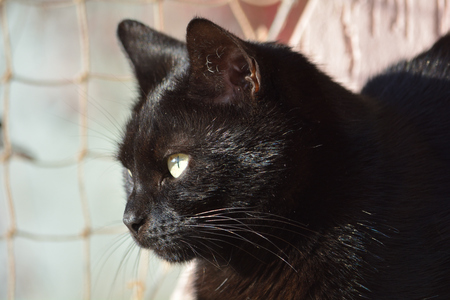 Black cat basking in the sun