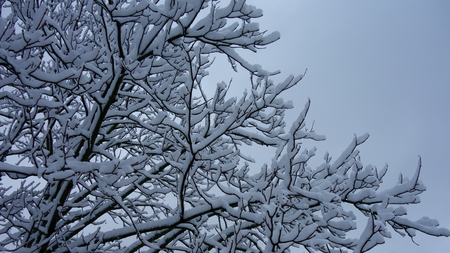 Snow covered branches and twigs against a blue sky