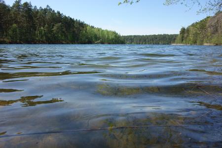 Tree-banked forest lake, clear water and blue skies Zdjęcie Seryjne
