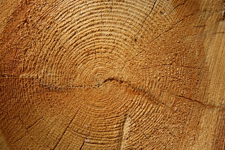 Wooden log cut, closeup for background or wallpaper