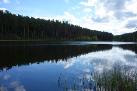 Forest lake at midday, trees and skies reflecting on the water Zdjęcie Seryjne