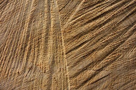 Tree trunk cross cut, closeup for background