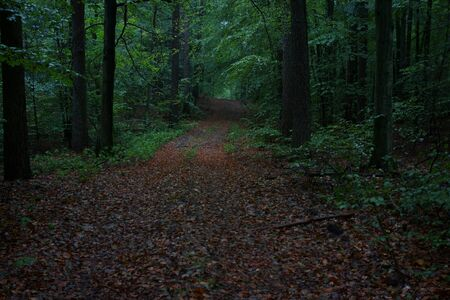 Rainy afternoon in the woods, summer is winding down