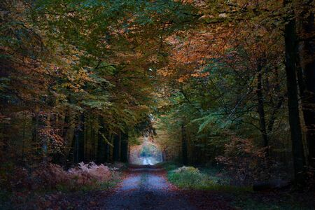 Peculiar interplay of light and color in the autumn forest Zdjęcie Seryjne