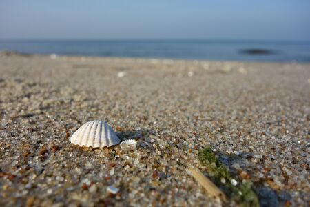 Two white shells on sand against a seascape perspective