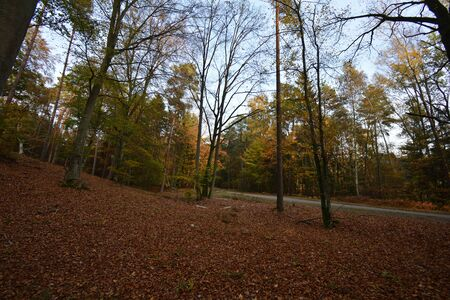 Autumn scenery with colorful trees and fallen leaves