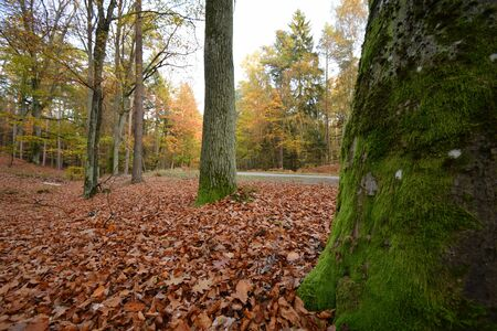 Autumn scenery with mossy trees and withered leaves