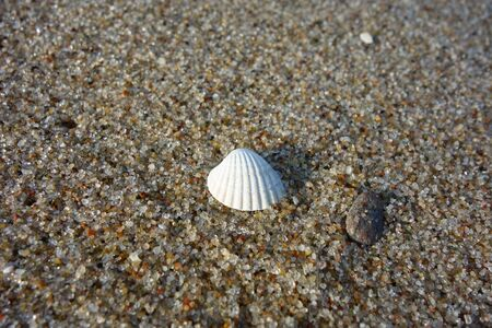Tiny white shell on sand in afternoon sunlight, macro