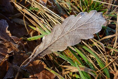 Frozen condensation on a brownish withered leaf, closeup