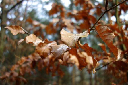 Withered leaves on a twig, closeup Zdjęcie Seryjne