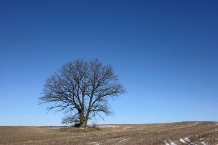 Empty field with a lone tree agains clear blue skies