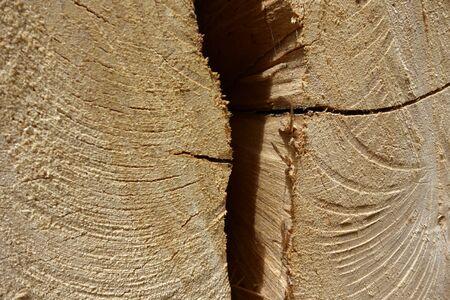 Cross cut wood texture with a crack, closeup