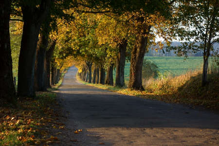 Narrow tree-lined country road in the autumn evening light